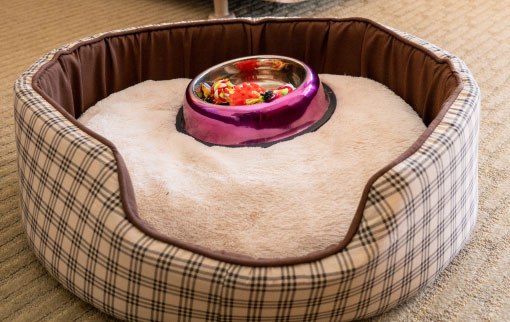 Pet Friendly Dog Bed